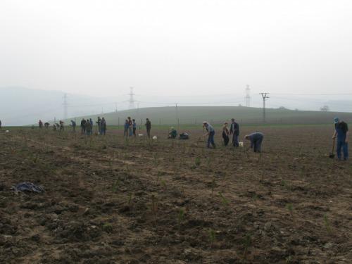 Výsadba lesíku 920-2 v r. 2009